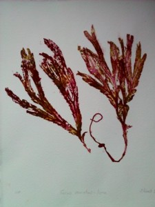 seaweed 1 small